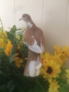 Pet Ringneck Doves for sale $10 each