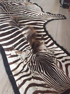 Real Zebra hide rug