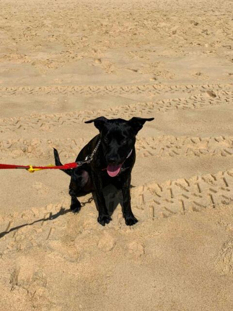 Puppy free to good home | Dogs & Puppies | Gumtree