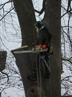 Tree service and landscaping