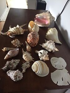 Assorted shells