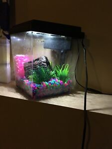 One gallon fish tank