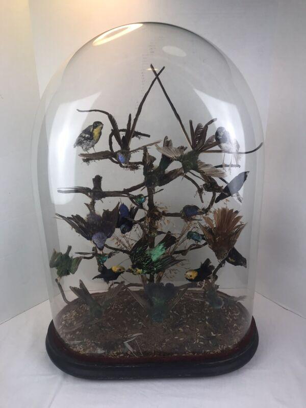 "25"" Antique Victorian Display Wavy Glass Dome Birds Taxidermy 1800s Atrium."