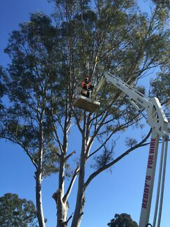 Tree services and stump grinding free quote(25%off)_$$$ Ashfield Ashfield Area Preview