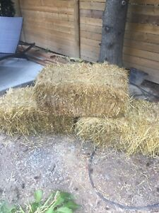 Three Hay Bales for $20