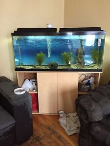 55 gallon aquarium with stand for sale