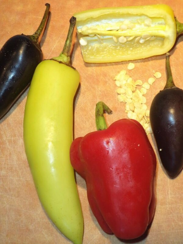 Mixed HOT & SWEET PEPPERS (50+ USA seeds). Jalapeno, Cayenne + Sweets! Organic.