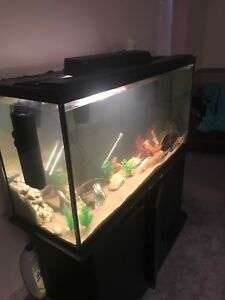 Trade fish or rehoming