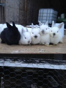 5 Adorable bunnies for SALE!!!