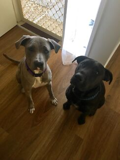 2 loved family dogs looking for a new home