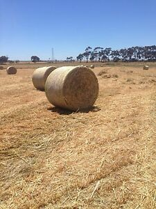 Hay grass and oats and wheat Cressy Colac-Otway Area Preview