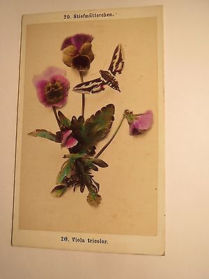 Stiefmütterchen - Viola tricolor mit Schmetterling ? Falter ? - Pflanze / CDV