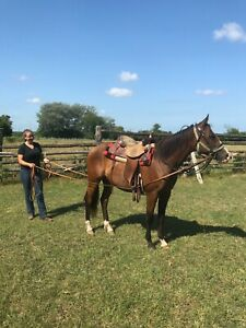 2yo project filly