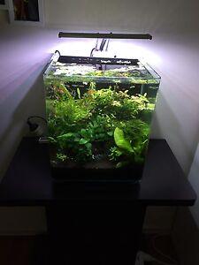 Planted aquarium Shoalwater Rockingham Area Preview