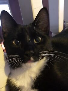Missing cat in Temple NE
