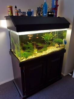 3ft fish tank with fish and everything you need