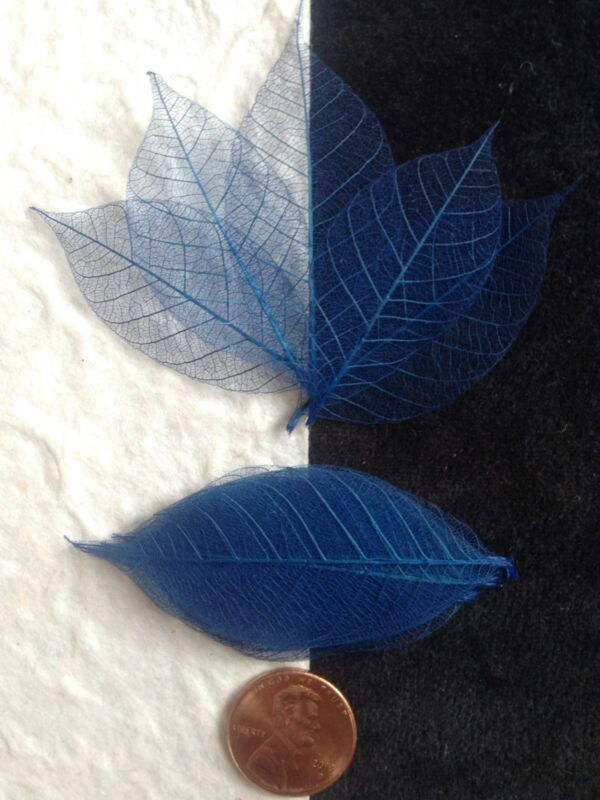 25 Skeleton Leaves Dark Blue leaf Small Cards soapmaking wedding Crafts veins