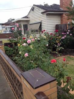 Rose and Fruit tree pruning (Qualified gardener) Preston Darebin Area Preview