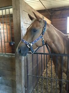 Selling 5 Year Old Palomino Mare