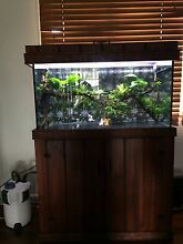 Display condition tank with custom hood and stand Lawnton Pine Rivers Area Preview