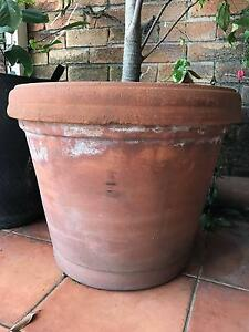 Large Terracotta Pot Woolloomooloo Inner Sydney Preview