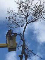 Tree removal /Stump grinding Macsemchuk Tree Services