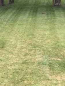 Lawn care/landscaping servicing York Region