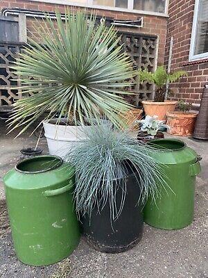 🌴 Genuine Old Vintage Antique European Enamel Garden Trough Plant Pot X1 🌴