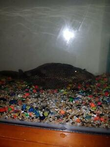 Fish + tank Logan Central Logan Area Preview