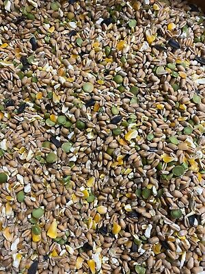 Chicken Food Feed 20kg Mixed Poultry Corn , Super Poultry Corn