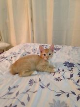 --->FREE KITTENS<--- Tewantin Noosa Area Preview