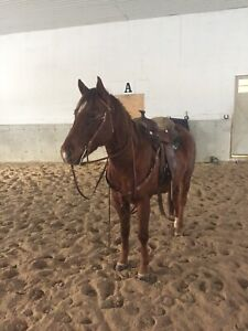 Horse for Lease!