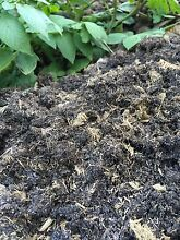 Composted horse/chicken manure - weed free Lower Plenty Banyule Area Preview