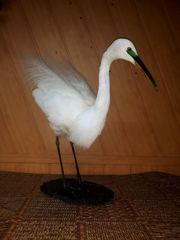 """Taxidermy Nice """"Bird"""" Excellent Composition!!!"""