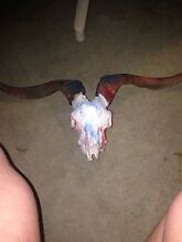 Goat skull Joondalup Joondalup Area Preview