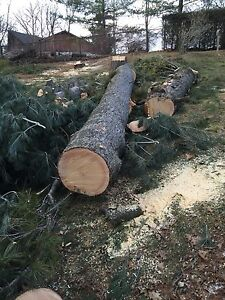 Tree removal services  London Ontario image 3