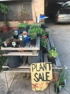Plant Sale all Weekend West Hindmarsh Charles Sturt Area Preview