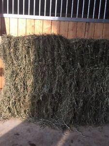 Second hay for sale