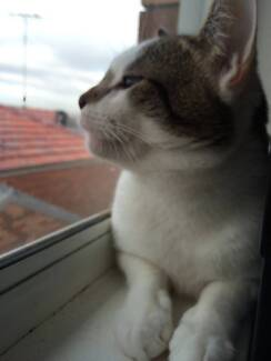 NEED SOMEONE TO LOOK AFTER 1 YEAR OLD CAT FOR A MONTH Kingsford Eastern Suburbs Preview