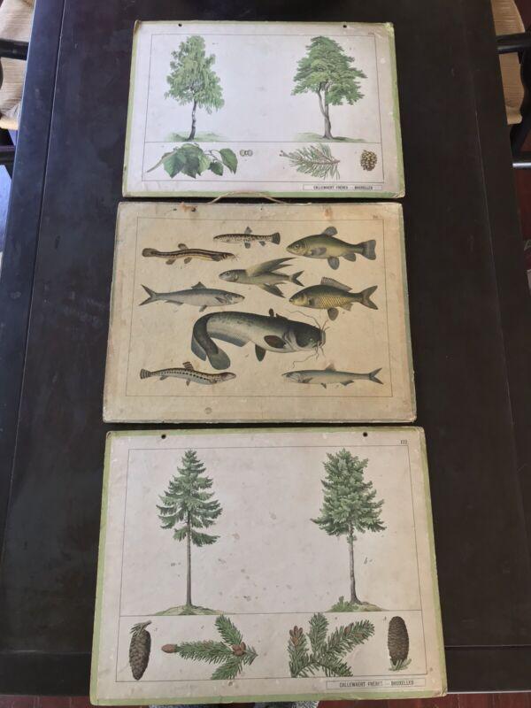 3 Antique Educational Botanical Prints Callewaert Fréres Bruxelles Trees Fish
