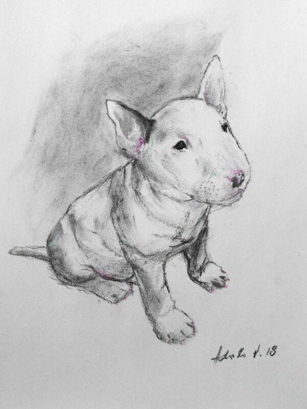 Puppy+English+Pitbull+Terrier+Dog+Charcoal%2FPastel+Drawing+A4+Original+Art