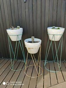 Kalanchoe plants in ceramic pots with retro look stands
