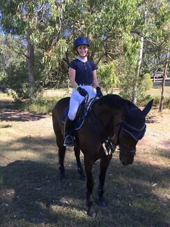 Wanted: Lease horse wanted or someone needing help with their horse?