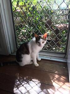 Cats looking for new home Bucasia Mackay City Preview