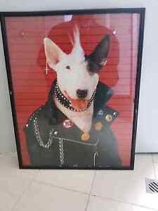 Bulldog picture Huntingdale Gosnells Area Preview