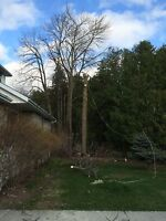 QUALITY AFFORDABLE TREE SERVICE