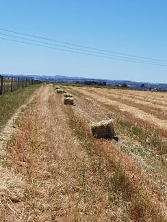 Oaten Hay Small Squares