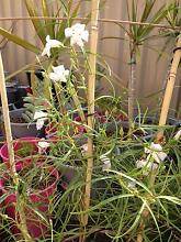 Native plants from $1 Beeliar Cockburn Area Preview