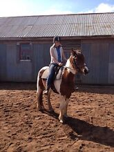 Horse Riding Lessons Blampied Hepburn Area Preview