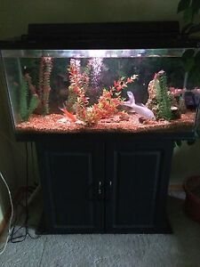 36 gal Hagen fish tank with stand and accessories